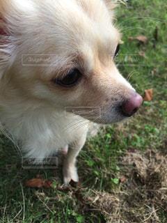 草の中に座っている茶色と白犬の写真・画像素材[1201420]