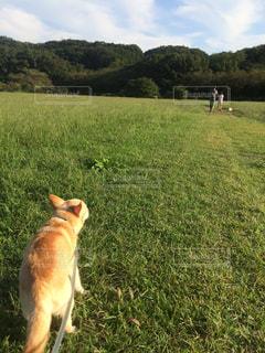 草の上に犬立ってカバー フィールドの写真・画像素材[1201426]