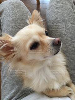 近くに犬のアップの写真・画像素材[1201428]