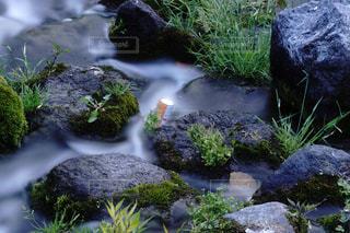 小川の空き缶の写真・画像素材[1202281]