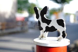 牧場の犬のリード結びの写真・画像素材[1202336]