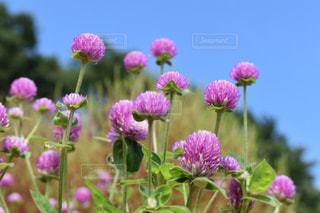 可愛いお花の写真・画像素材[2467375]
