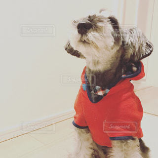 着ぐるみを着た犬の写真・画像素材[1202551]