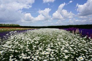 花畑の写真・画像素材[2223360]