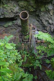 ペリリュー島に眠る砲台の写真・画像素材[1202932]