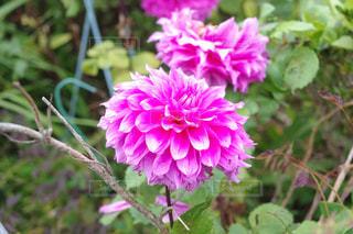近くの花のアップの写真・画像素材[1218286]