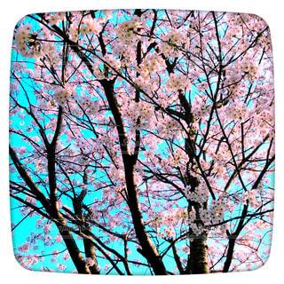 桜の写真・画像素材[1202863]