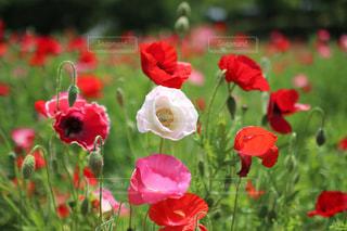 近くの花のアップの写真・画像素材[1204774]