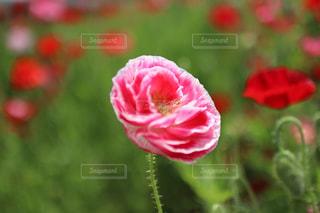 近くの花のアップの写真・画像素材[1205169]