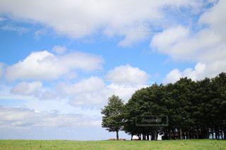 背景の木と大規模なグリーン フィールドの写真・画像素材[1380470]