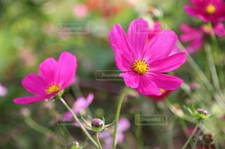 近くの花のアップの写真・画像素材[1534507]