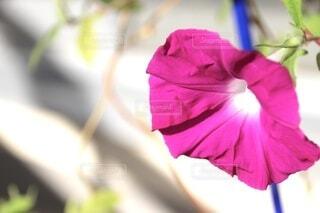 花のクローズアップの写真・画像素材[3738309]