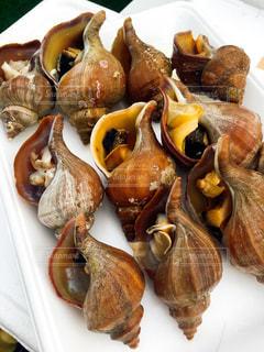 食品のプレート。つぶ貝の整列。の写真・画像素材[1203351]