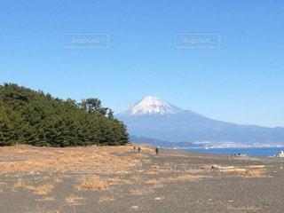 三保の松原からの富士山の写真・画像素材[1203581]