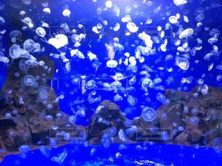 青の写真・画像素材[1203833]