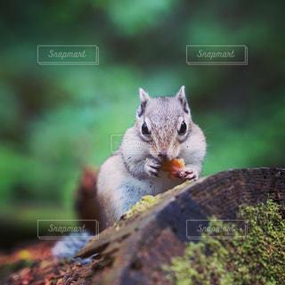 木の上のリスのクローズアップの写真・画像素材[3254770]