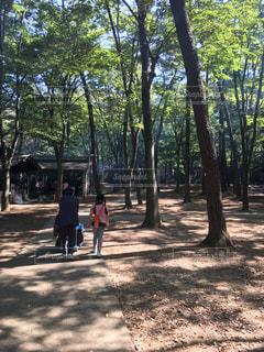 清水公園キャンプ場の写真・画像素材[1213308]