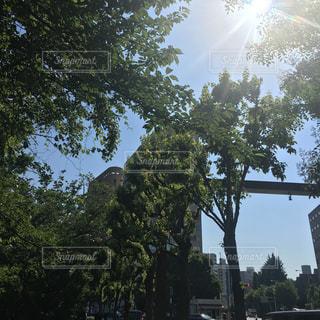 オフィス街の太陽の写真・画像素材[1223350]