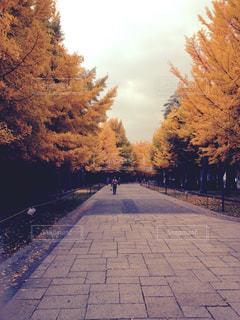 道の端に木のパスの写真・画像素材[1207145]