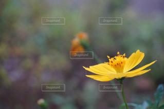 黄色の花の写真・画像素材[1208461]