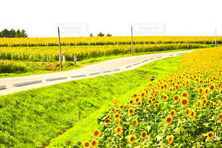 近くに緑豊かな緑のフィールドのの写真・画像素材[1316918]