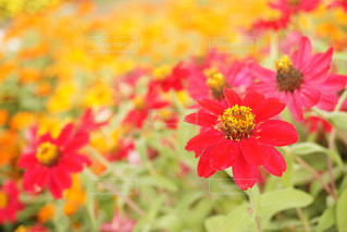近くの花のアップの写真・画像素材[1322854]
