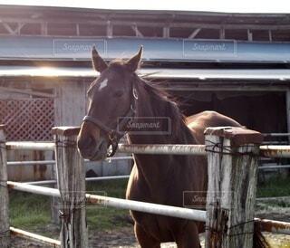 馬の写真・画像素材[3705086]