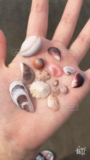 貝殻の写真・画像素材[1232009]