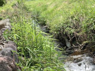 草木香る用水路の写真・画像素材[1206732]