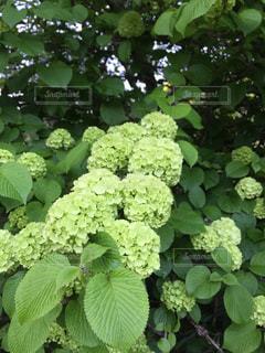 緑のブーケの写真・画像素材[1206837]