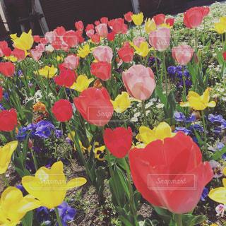 色とりどりの花の花瓶の写真・画像素材[1206794]