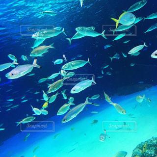 スイミング プールの水中ビューの写真・画像素材[1206795]