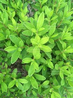 緑の草の束の写真・画像素材[1206808]
