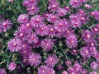 植物にピンクの花の写真・画像素材[1209858]