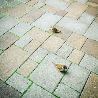 鳥の写真・画像素材[1282079]