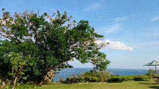 背景の木と大規模なグリーン フィールドの写真・画像素材[1212029]