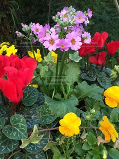 近くの花のアップの写真・画像素材[1212125]