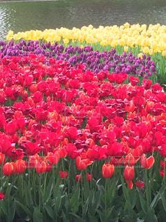 花畑の写真・画像素材[1212385]