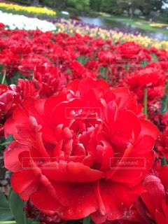 近くの花のアップの写真・画像素材[1212387]