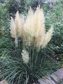 近くの植物のアップの写真・画像素材[1220670]