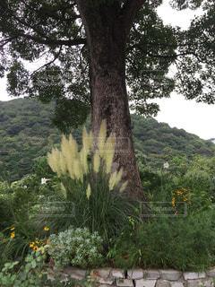 大きな木の写真・画像素材[1220671]