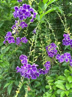 近くの植物に紫の花のアップの写真・画像素材[1220680]