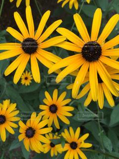 黄色の花の写真・画像素材[1220683]