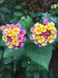 近くの花のアップの写真・画像素材[1220686]