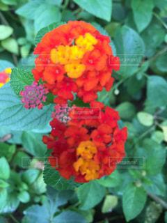 近くの花のアップの写真・画像素材[1220702]