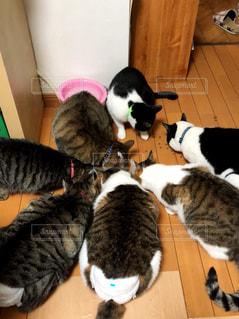 猫の写真・画像素材[2064648]