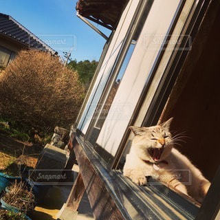 猫の写真・画像素材[40988]