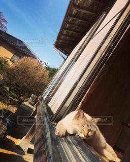 猫の写真・画像素材[40993]