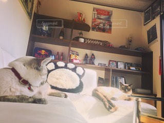 猫 - No.41473