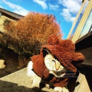 猫の写真・画像素材[41526]